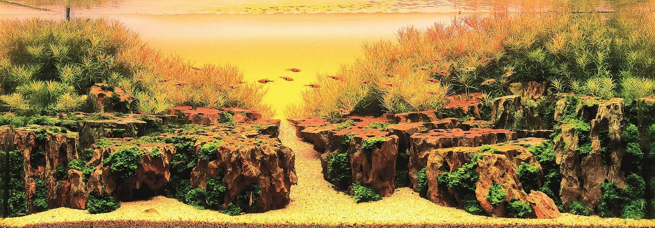 Самый красивый аквариум (28 фото)