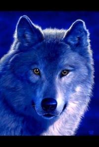 Волчица :), 26 сентября , Печора, id127711322