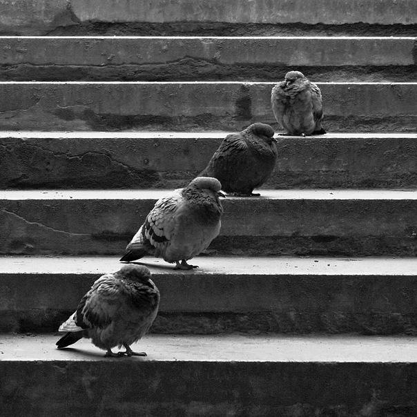 Автор фото: .  На златом крыльце сидели :царь,царевич,король,королевич !