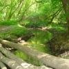 Сохраним наш лес чистым! (субботник 2 июня)
