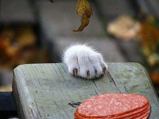 Кот ворует картинки
