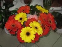 Букет невесты комнатные растения