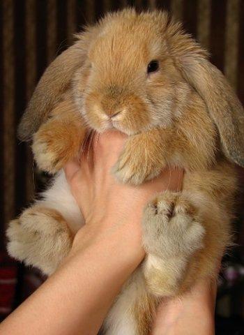 Продам декоративные кролики