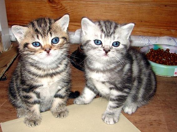 котята фото с названиями пород