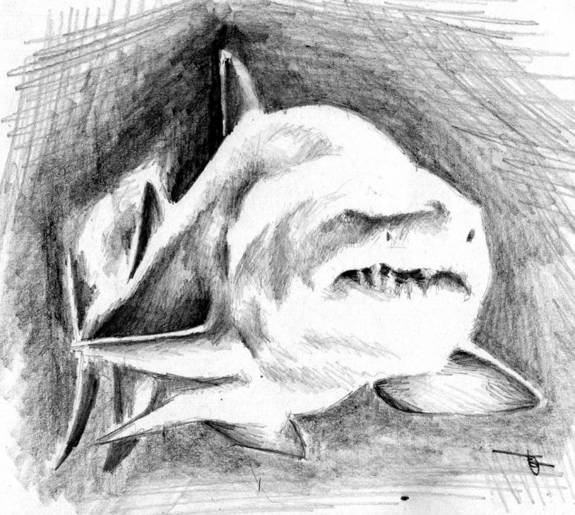 рисунки акул карандашом: