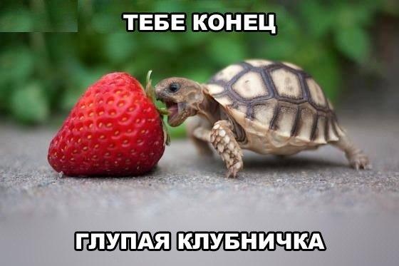 http://cs10537.userapi.com/v10537134/1465/tGtXG6HuXsk.jpg