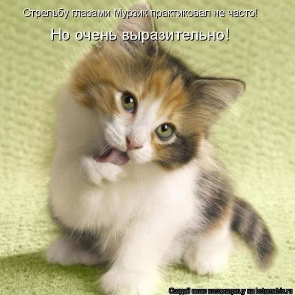 Приколы с кошками фото, бесплатные ...: pictures11.ru/prikoly-s-koshkami-foto.html