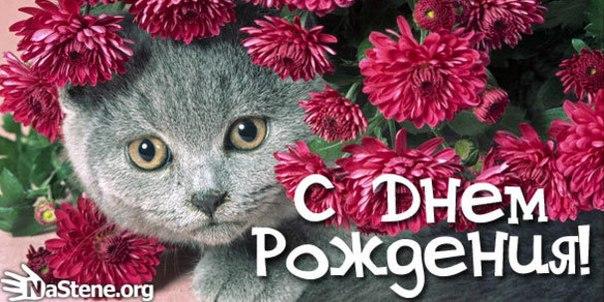 Поздравления с днем рождения женщине-кошке