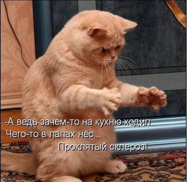http://cs10550.vkontakte.ru/u23458891/122813886/y_63fddcd0.jpg