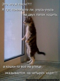 Светлана Асмандиярова, 16 апреля , Санкт-Петербург, id118749220