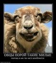 Фото Ильи Айбашева №1