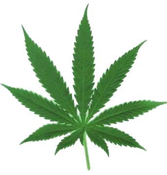 YG запустил линию марихуаны