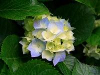 Lady Blossom, 21 ноября , Львов, id84433623