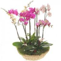 Живые цветы в плошках цветущие где купить в пензе цветы