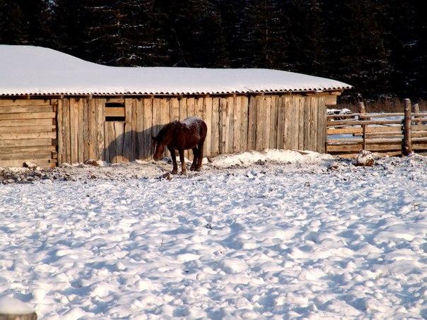 Грустная местная лошадка. В деревне многие жители держат в своём хозяйстве лошадь.