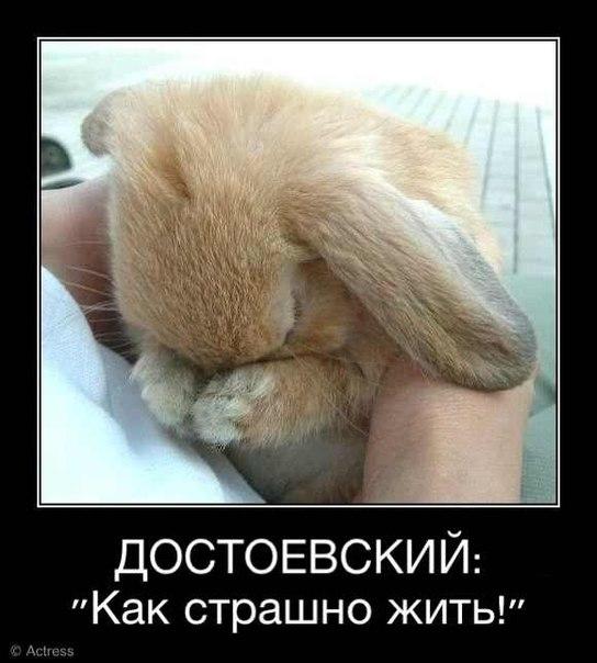 http://cs10574.userapi.com/u14160343/-14/x_d0781cf2.jpg