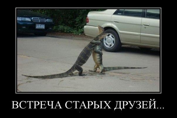 http://cs10576.vk.me/u27619991/-14/x_6b166250.jpg