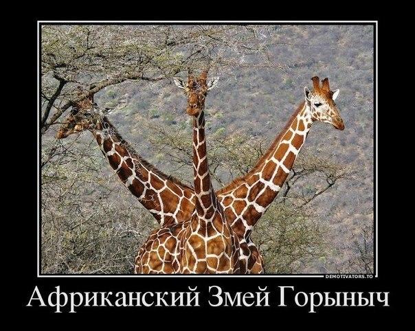 http://cs10579.userapi.com/v10579105/979/6b3jY4kwbag.jpg