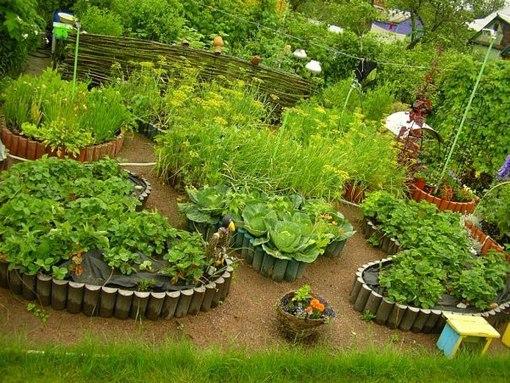 клубника выращивание и уход на урале сорта
