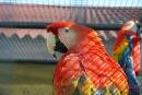"""Парк птиц  """"Воробьи """" был открыт для посетителей в июне 2005 года."""