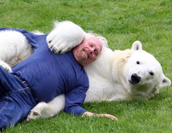 Единственный человек в мире, плавающий с медведем + мужчина, подружившийся со львами