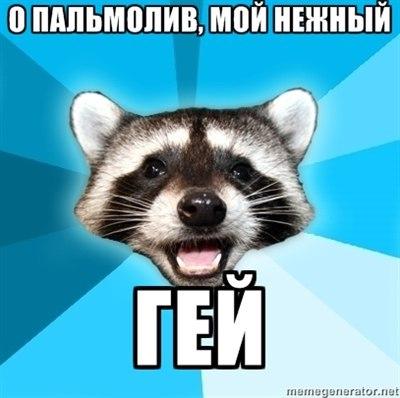 аватарки енот: