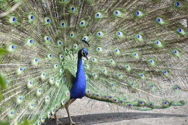 Снимок сделан в зоопарке г.Хельсинки. Автор фото: .