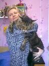 Мейн-кун - самая крупная домашняя кошка.