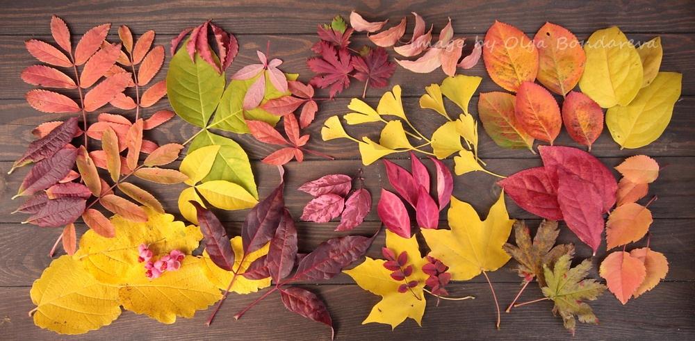 мужского фото гербария из осенних листьев светильники