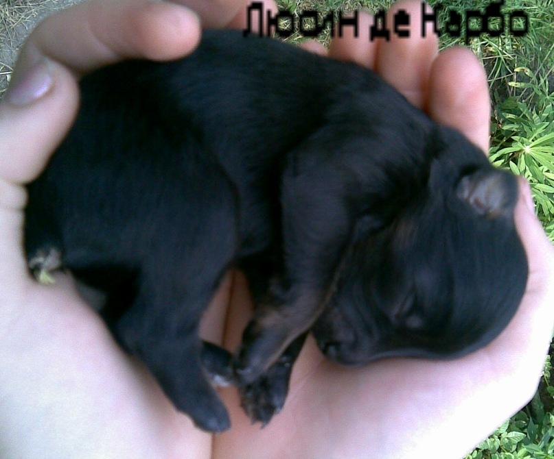 http://cs10625.vkontakte.ru/u54149119/100156137/y_6773308a.jpg