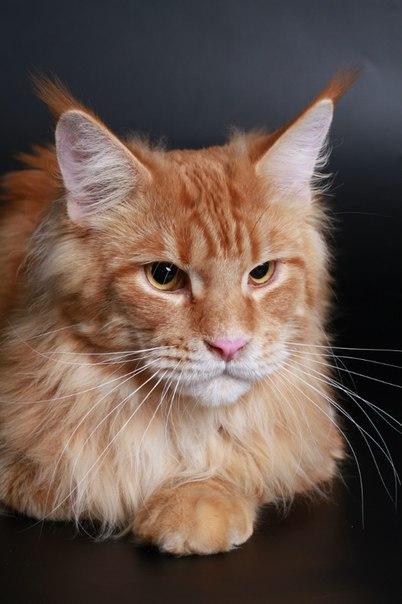 Каталог вяжущих котов CzVKd7iUq-4