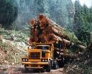 Американский лесовоз Peterbilt - YouTube