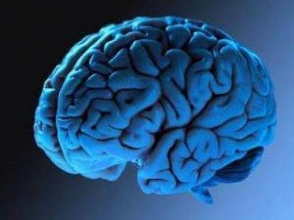 Вьетнамские ученые нашли новый смертельный для мозга вирус World News FederalPress
