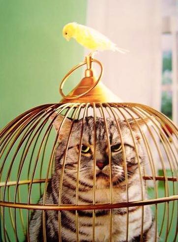Ещё со мной случилось приключенье, Меня к себе ЖАР-ПТИЦА в плен взяла.