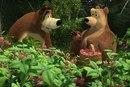 А картинки Маша и Медведь не оставят равнодушными ни взрослых.