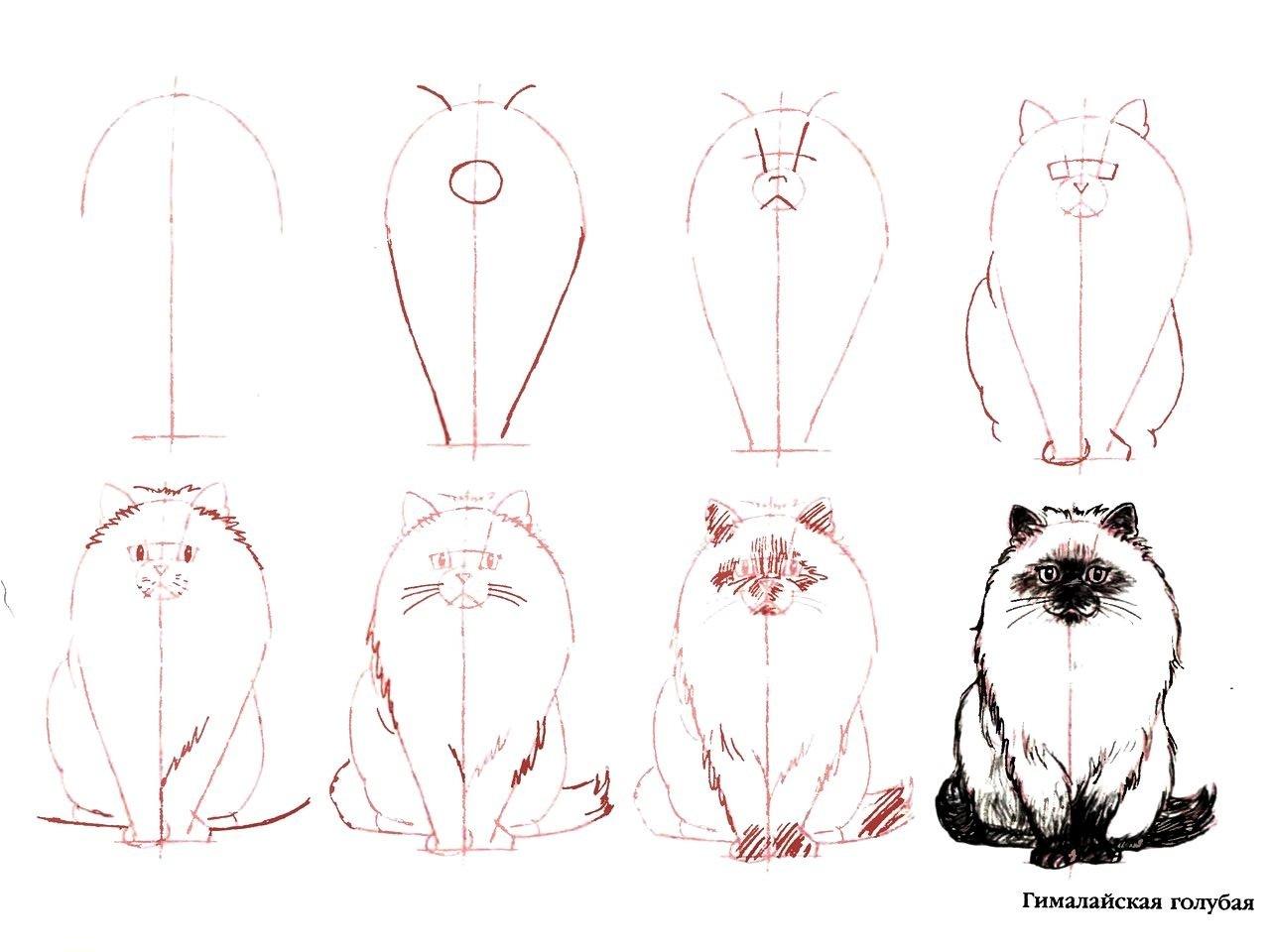 Трафареты кошек и котов для декора своими руками - Усатики 28