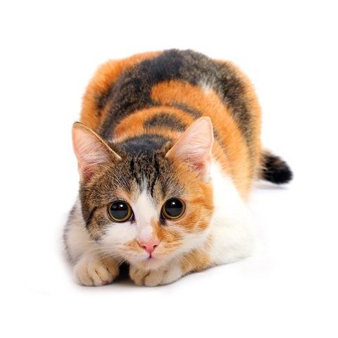 Наверное, каждый, кто любит кошек, не раз слышал в своей жизни известное...