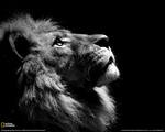 Lion Lion, 17 ноября 1990, Самара, id120634500