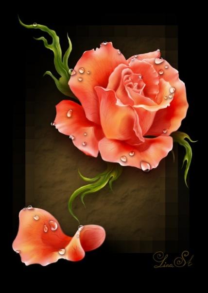 РОЗА пожайлуй для меня самый единственный цветок который успокаивает своим видом.