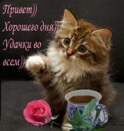 Желаю, чтобы каждое утро солнышко шептало тебе на ушко «с добрым утром» Хорошего дня)))