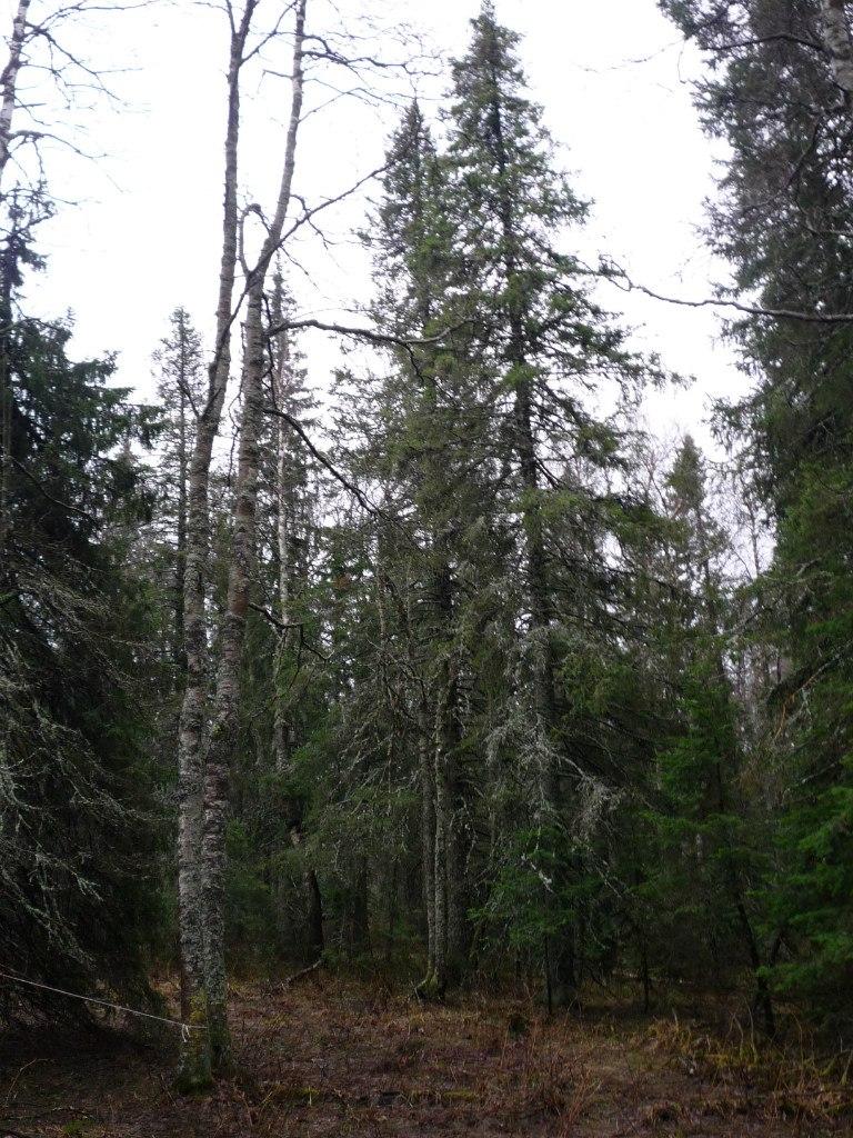Загадочный лес (23.06.2015)