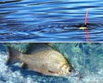 Платная рыбалка в Запрудном - YouTube