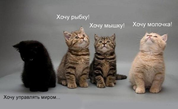 http://cs10713.vkontakte.ru/u17271622/-6/x_757055b1.jpg