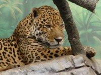 Туроператоры предлагают построить в Волгограде зоопарк.