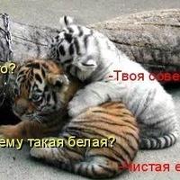 Артем Алимов, 20 декабря , Москва, id170011167