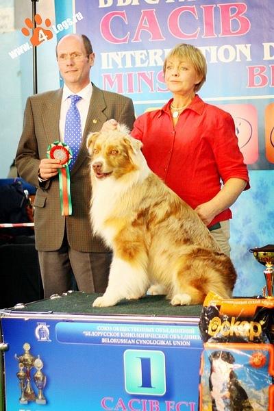 Выставочные успехи наших собак - 2 X_8cd4489b