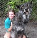 Посмотрите некоторые самые большие собаки в мире.