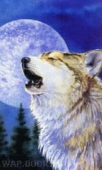 **volk Odinohka, 26 декабря 1999, Ачинск, id152193525
