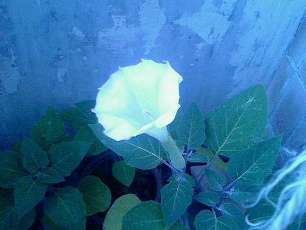 http://cs10760.vkontakte.ru/u59540973/116270696/x_1e2fc5dc.jpg