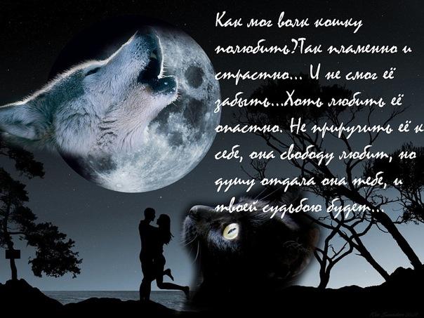 Стихи и песни про волков в картинках X_e2f55f80